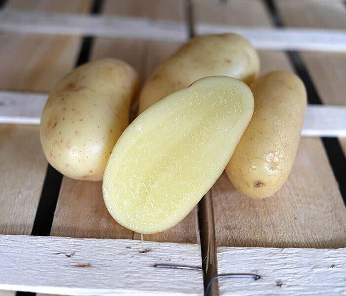 Pomme de terre Celtiane (lavee) – Cal. 35/55 – le kilo