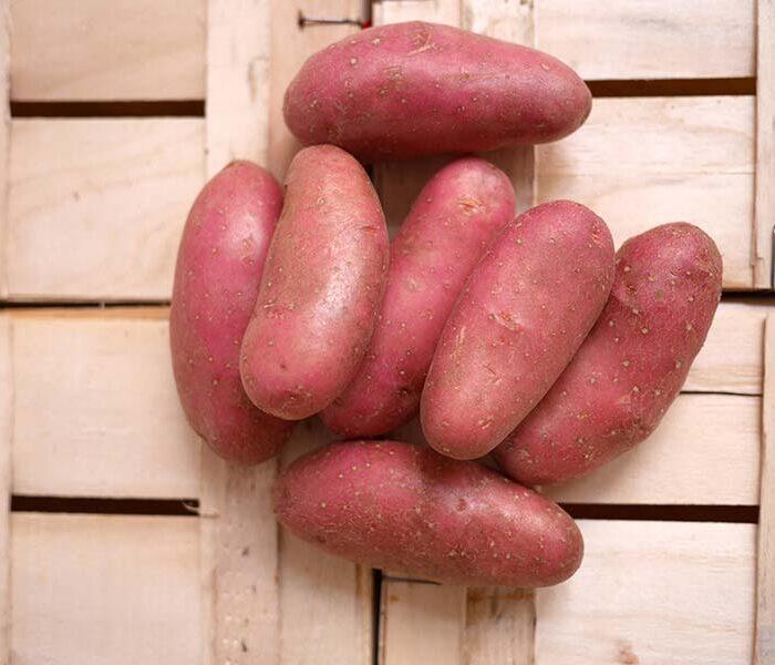 Pomme de terre Cherie (lavee) – Cal. 35/55 – le kilo