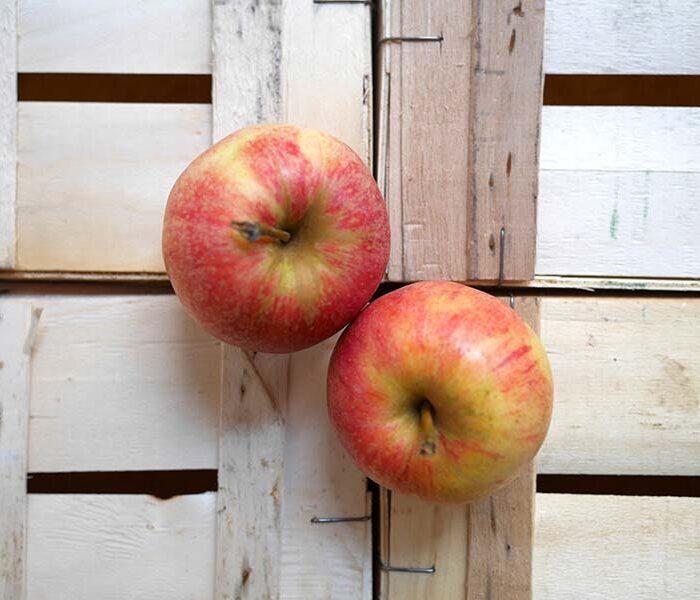 Pomme Gala – Cal. 135/170 – les 3 pieces