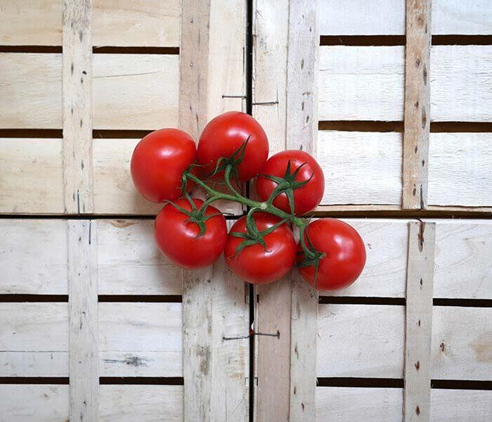 Tomate grappe (pleine terre) – la grappe