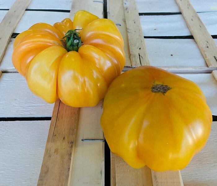 Tomate Ananas (pleine terre) – les 2 pieces
