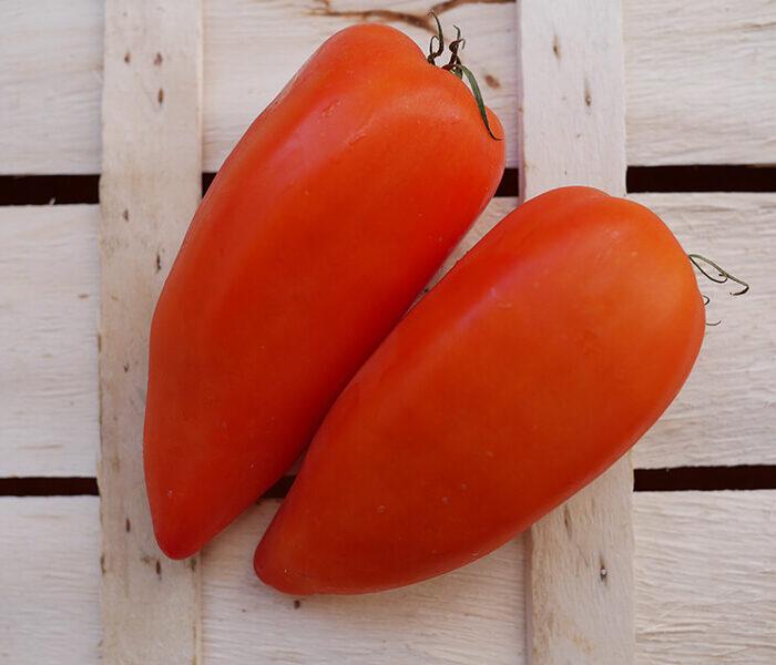 Tomate Cornue des Andes (pleine terre) – les 2 pieces