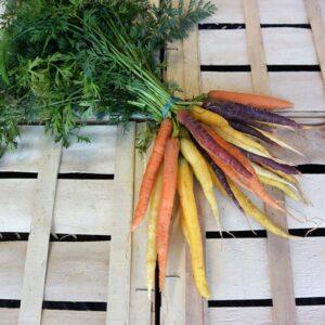 mini-carottes-fanes-multicolores