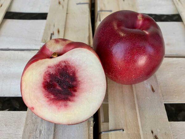 nectarine-blanche-cal-A