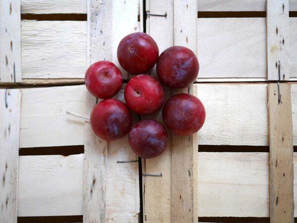 Prunes-rouges-1