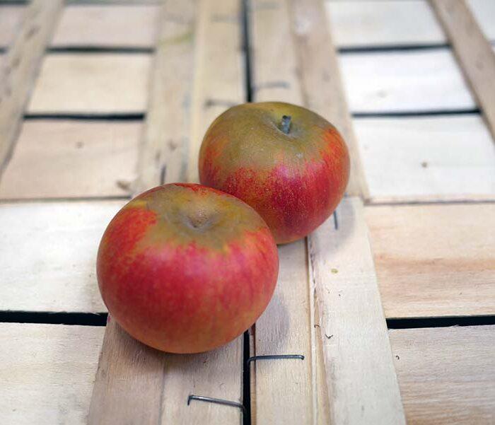 Pomme Reine des Reinettes – Cal. 135+ – les 3 pieces
